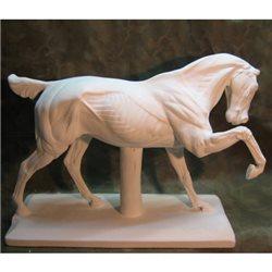Конь анатомический